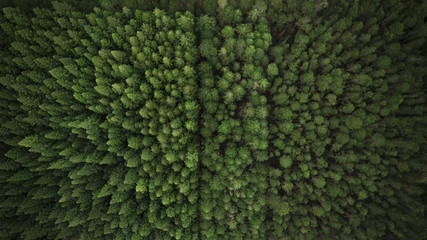 Aerial View of Trees and Plantation Wall mural