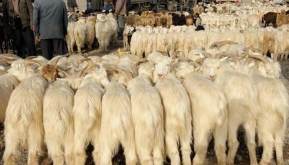 Animal market in Kashgar
