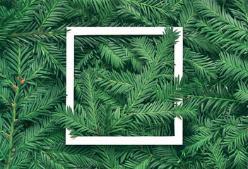 Creative background of pine branch with white paper frame. New Year and Merry Christmas Concept. Wall mural