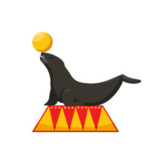 performance of a fur seal in a circus, dressed fur seal juggles with a ball