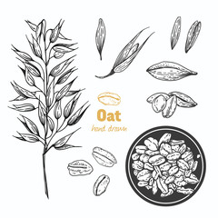 Oats vector hand drawn illustration