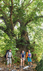 Three friends hikers standing near extremely Old tree sycamore or platan in Turkey, while travelling by Lycian Way
