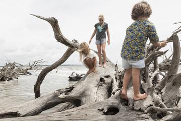 Caucasian boy and girls climbing on driftwood on beach