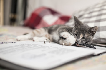 A cute, funny three-colored kitten lies on a notebook and chews a pencil.