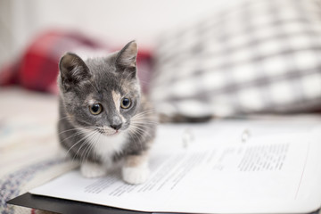 Funny, cute kitten tricolor with a clever look sitting on the notebook.