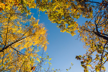 Colorful tree canopy in Autumn on sunny morning - Autumn background 3