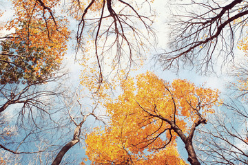 Autumn trees losing their leaves