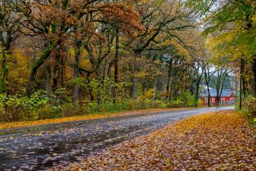 Autumn Danish Forest in November in Viborg, Denmark
