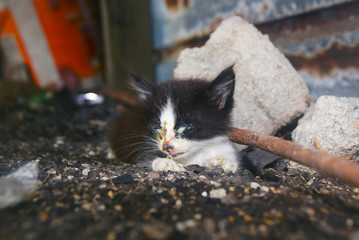 Small Homeless Street Kitten With Eye Damage As A Symptom Of Herpes Cats Was Sitting On The Ground