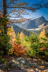 Wall Mural - Cold forest in Tatra mountains at sunrise in Poland