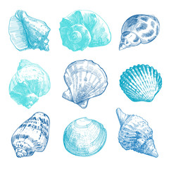 Sea shells sketch set. Color tender doodle seashell silhouettes isolated on white background. Vector ocean life hand drawn illustration for SPA-design