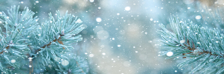 Horizontal christmas background with pine branches and snow