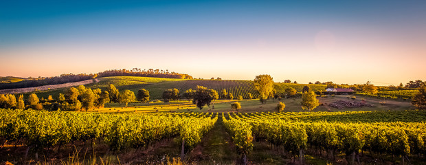 Spoed Fotobehang Wijngaard Sunset landscape bordeaux wineyard france