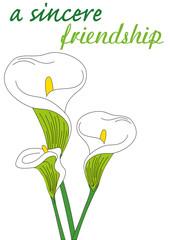 calla fiore significato in inglese
