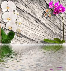orchidées sur bois de vieille souche avec reflets