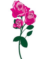 fiore rosa colore rosa
