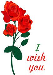 rosa rossa significato in inglese