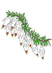 erica bianca fiore