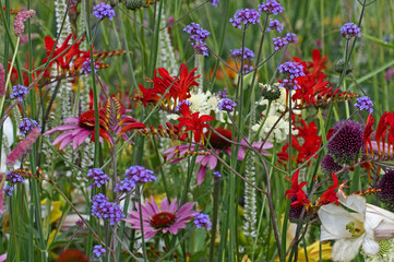 Colourful mixed flower meadow