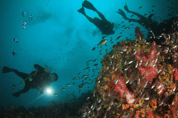 Scuba diving. Scuba divers explore coral reef underwater