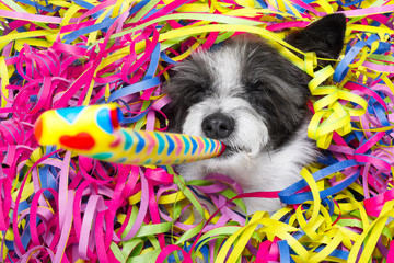 happy new year dog celberation