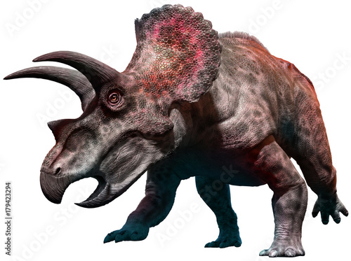 Wall mural Triceratops