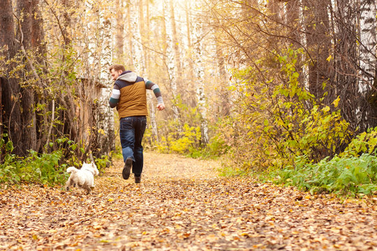 Man playing in autumn park with white highland terrier. Friendship between man an a dog.