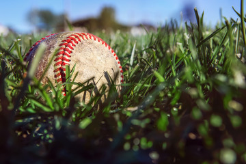Baseball lying in the deep grass of the outfield