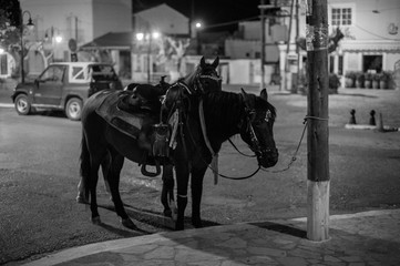 Pferde in Samos