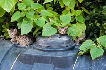 Katzen zwischen Blättern