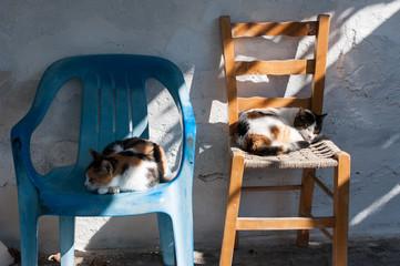 2 schlafende Katzen auf Stuhl