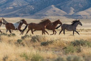Herd of Wild Horses (mustangs) in the Utah Desert Wall mural