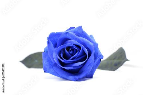 Fiore Di Una Rosa Blu Isolata Su Sfondo Bianco Stock Photo And