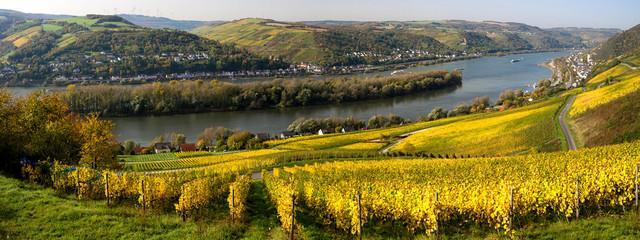 Rheinsteig Panorama bei Lorch im Herbst