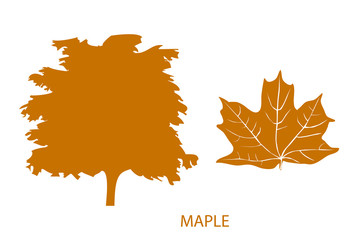 The set of simple icons of tree and leaf. Maple