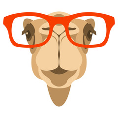 camel face in glasses vector illustration front