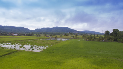 Aerial Panorama Landscape View of Paddy Field with a trail over a mountains background