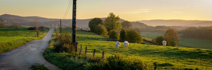 Un panorama sur une route de campagne au coucher de soleil, avec des vaches dans un prés