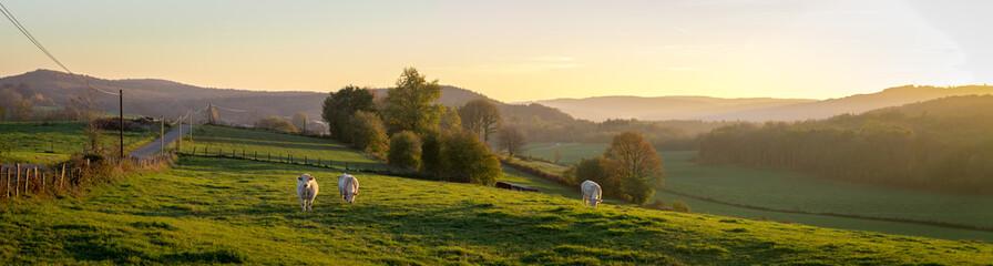 panorama d'un coucher de soleil sur la campagne avec des vaches dans un pré et des montagnes au fond