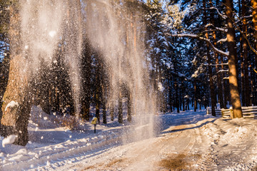 winter, snow, sun, trees, forest, cold, sunny, house, village, landscape, nature, white, road, frost, sky, season, blue, frost, wood, day