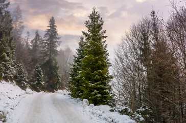 road through snowy forest on foggy morning