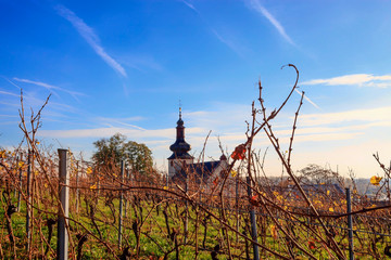 Small church in autumnal vineyard with yellow leaves and blue sky in Nierstein