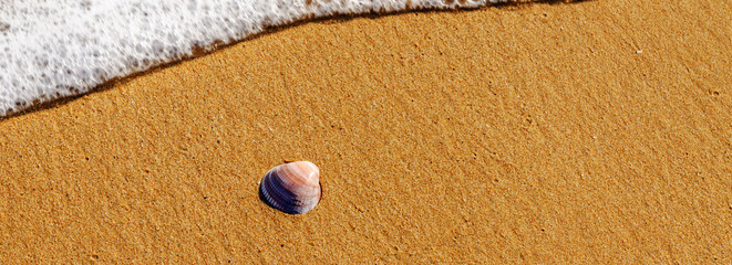 natural sea shell lying on the sandy beach, washed by water, sunny day