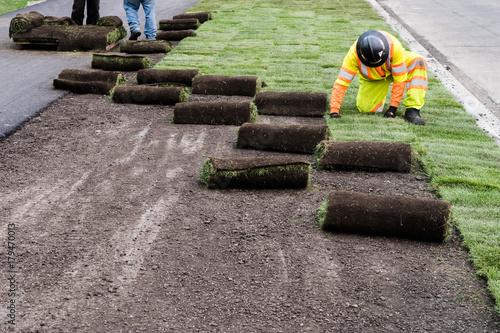 Landscaping sod installation work