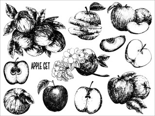 Hand drawn sketch set of apple fruits and flowers. Whole fruit with leaf and sliced. Vector illustration isolated on white background.