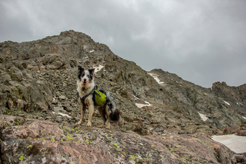 Dog Hiking Rocky Mountains with Backpack