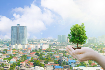 Ecology concept Human hands holding big plant with background environment day and buildings of the public