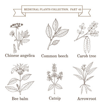 Vintage collection of medical herbs and plants