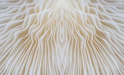 Foto auf Acrylglas Makrofotografie abstract background macro image of Sajor-caju mushroom.