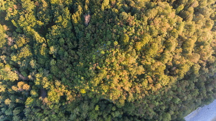 Aerial view of mixed forest.